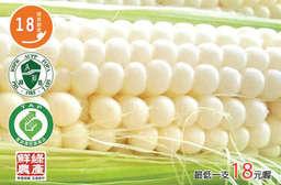 慶祝鮮綠農產網路月破十萬支【白色水果玉米】,如水果般鮮甜爽脆,好吃破表! 每支只要18元起,即可享有【鮮綠】產銷履歷-18度高甜度白色水果玉米〈20支/40支/80支〉