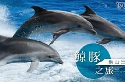 宜蘭賞鯨龜山島售票處-不分平假日!我的老天鵝啊~超便宜賞鯨專案