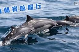 宜蘭賞鯨船行-不分平假日!頂級豪華超值專案