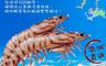 生活市集 5.0折! - 鮮潮頂級新鮮澎湖鮮嫩大明蝦